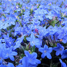 Fragrant Plants For Shade - perennial flowers bloom guide costa farms