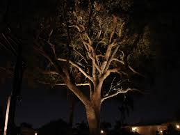 Outdoor Up Lighting For Trees Tree Lights Landscape Landscape Lighting Ideas