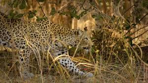 africa u0027s hunters smithsonian earth