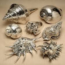 where to buy seashells 25 best shells ideas on sea shells seashell and