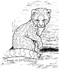 cheetah coloring pages print ba cheetah coloring free