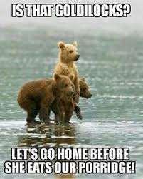 bear cubs animal cuteness funnies pinterest animal