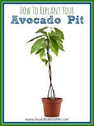 Indoor Garden Containers - 202 best garden images on pinterest plants gardening and