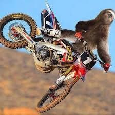 Motocross Meme - dirt biking sloth sloths know your meme