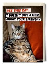 Birthday Meme Cat - sarcastic happy birthday cat memes happy birthday cat meme