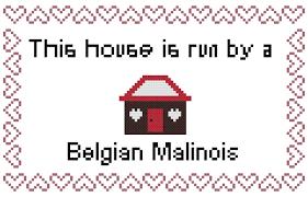 belgian shepherd x mastiff belgan malinois this house is run by a belgian malinois instant