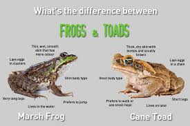 what s what s the difference between frogs and toads frogs and toads