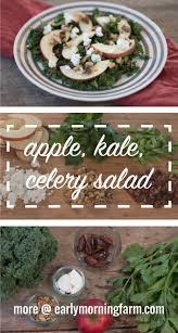 celery salad apple kale celery salad early morning farm