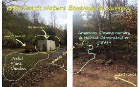 a ginseng habitat demonstration garden wild ozark