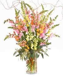 florist st louis fresh cut snap dragons from walter knoll florist louis mo