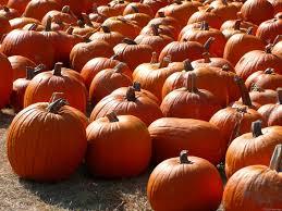 autumn pumpkin wallpaper fall pumpkins wallpapers gallery image mrfab