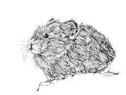 pika drawing mouse art fine art illustration animal