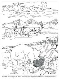 coloring pages animals hibernating hibernating animals coloring pages coloring pages plus prints