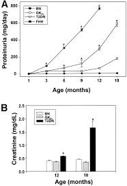 initial characterization of a rat model of diabetic nephropathy