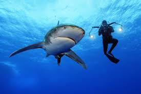 new national geographic exhibition showcases sharks