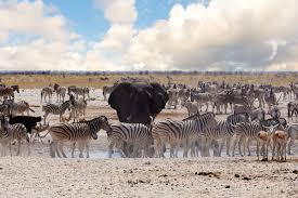 african safari animals african safari kruger to cape town luxury train webjet exclusives