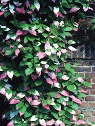 how to support climbing plants supporting plants hgtv