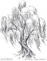 weeping willow tree drawings design pictures