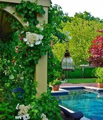 kletterpflanzen fã r balkon 99 besten gartenbepflanzung bilder auf gärten