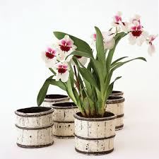 Orchid Centerpieces Potted Flower Esp Orchid Centerpiece Ideas U2013 Need Help