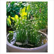 two plant container pond container pond pinterest plants