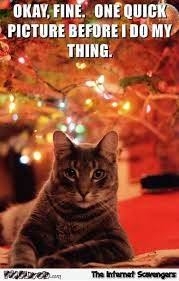 Christmas Cat Memes - one quick picture before i knock the christmas tree down funny cat