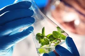 environmental science kean university