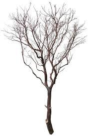 manzanita trees manzanita tree 72 blooms and branches