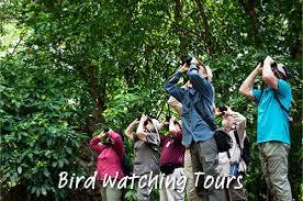 christmas island tourism association bird watching tours