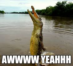 Yeahhh Meme - f yeah alligator memes quickmeme