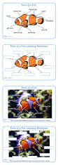 32 best fisk images on pinterest ocean unit teaching ideas and