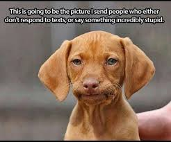 Silly Dog Meme - dog memes funny pictures with dogs and puppy