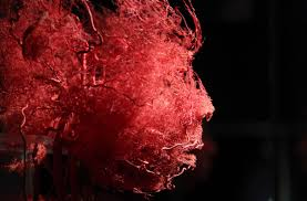 A Picture Of The Human Anatomy Inside Our Insides Body Exhibits Continue International Exposure