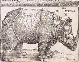 dürer u0027s rhinoceros wikipedia