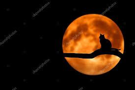 cat on moon stock photo besmirhamiti 77086731