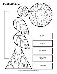 best 25 parts of a plant ideas on pinterest plant parts parts