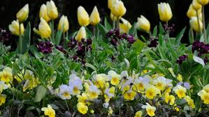 3 best and worst spring plants for beginner gardeners angie u0027s list