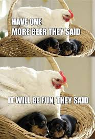Funny Chicken Memes - have one more beer they said it will be fun they said memes and comics