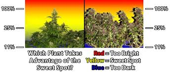 best light for weed seedlings complete guide to cannabis plant training grow weed easy