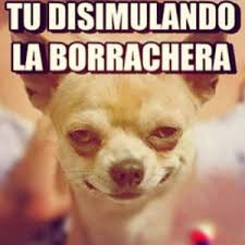 Memes De Chihuahua - perro chihuahua meme s mega memeces humor jaja pinterest