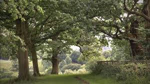 walking tag wallpapers trees walking paths nature wallpaper for