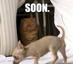 Stupid Cat Meme - funny cat memes best cute kitten meme and pictures