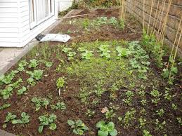 seedlings dom u0027s kitchen garden