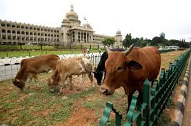 holy cows that weren u0027t wsj