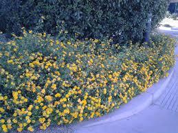 garden design garden design with lantana on pinterest drought