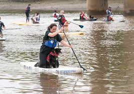thames river boats dogs natasha balletta photography city paws club human and dog paddle