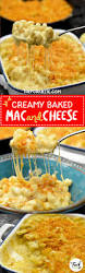 creamy cheesy baked mac and cheese the fork bite