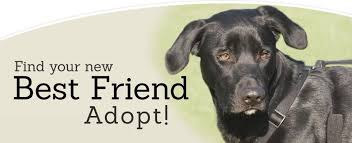 Dogs For The Blind Adoption Adopt Lakeland Animal Shelter