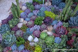 native australian ground cover plants real world gardener nightjars and betel leaves