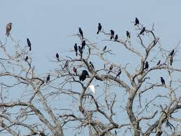 bird problems and solutions birds in trees bird barrier